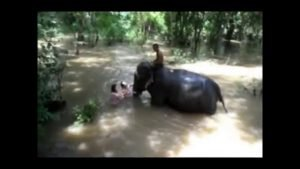 Bathing with Elephants
